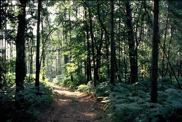 La forêt de Hundaye